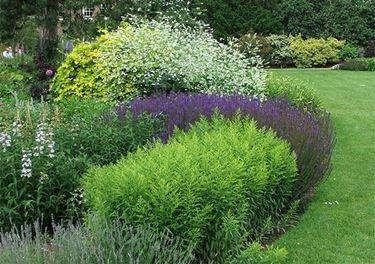 piante perenni per aiuola