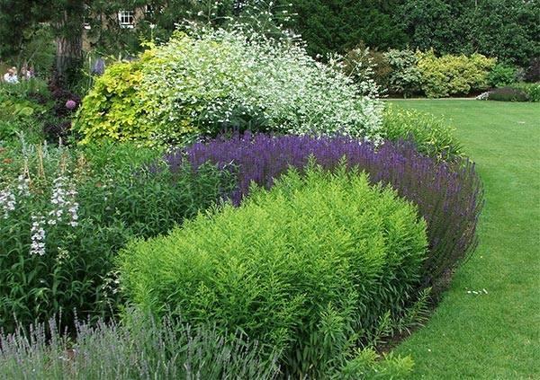 Piante per aiuole piante da giardino aiuole piante for Aiuole giardino con sassi