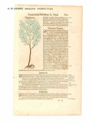 Libro di botanica tedesco, 1595
