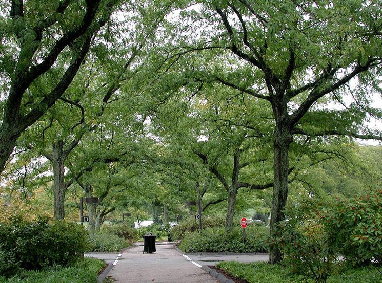 Parco con alberi di robinia
