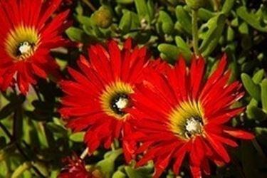 Aiuole piante grasse piante grasse aiuole piante for Piante grasse per aiuole