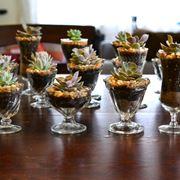 Piantine grasse in bicchierini di vetro
