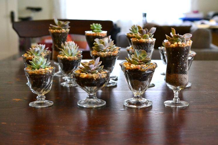 Bomboniere piante grasse piante grasse fare bomboniere for Vasi per bonsai prezzi
