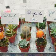 bomboniere piante grasse prezzi