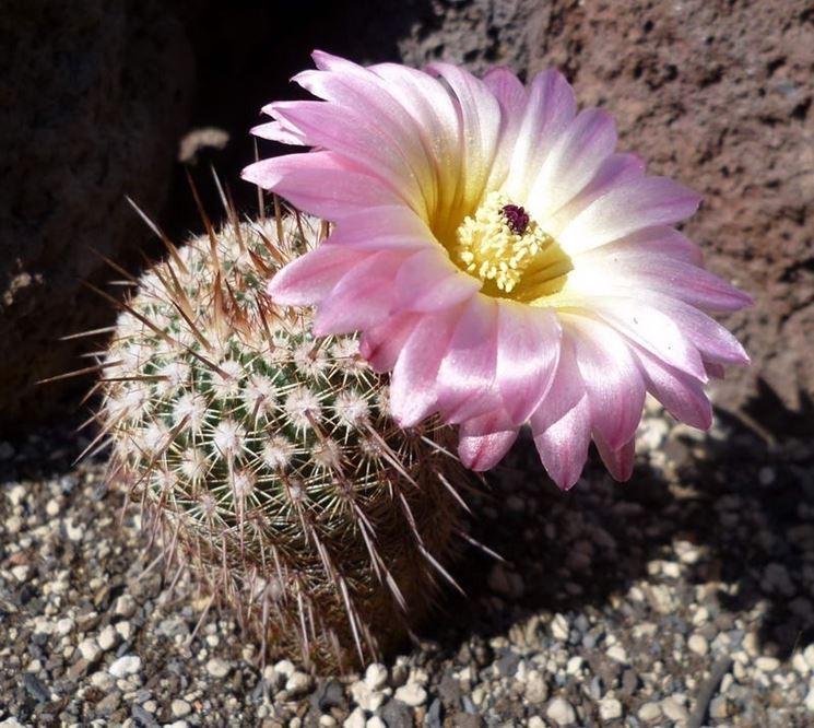 Cactus Piante Grasse Piante Grasse Cactus Piante