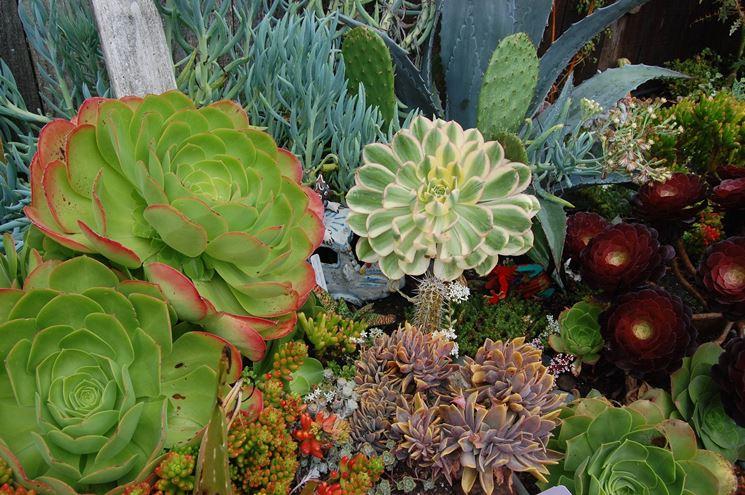 Una grande variet� di piante grasse