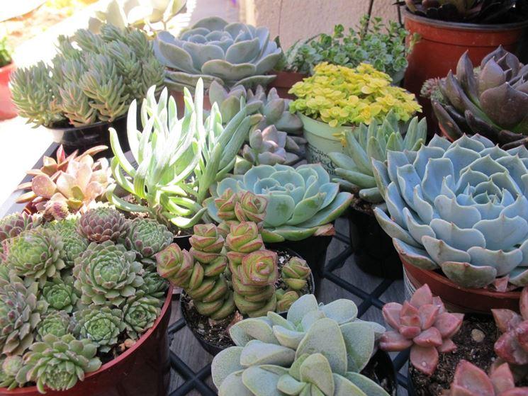 Coltivazione di piante grasse