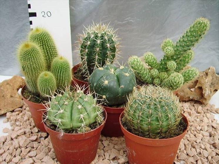 Cura piante grasse piante grasse come prendersi cura for Piante grasse in giardino