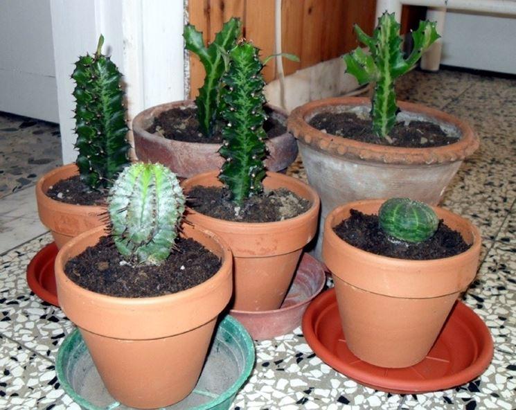 Esempio di piante grasse appena rinvasate