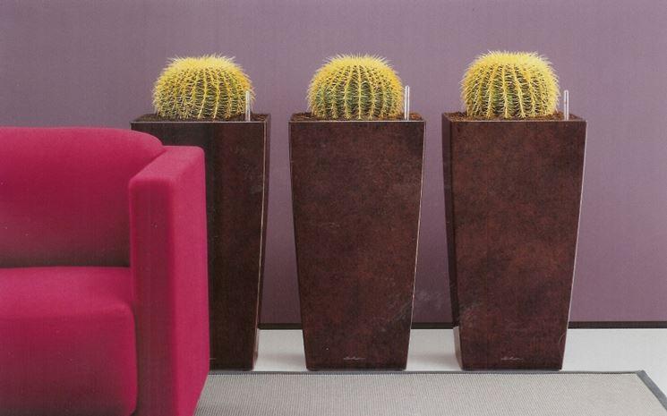 Echinocactus Grusonii appartamento