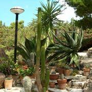 Dettaglio giardino piante grasse