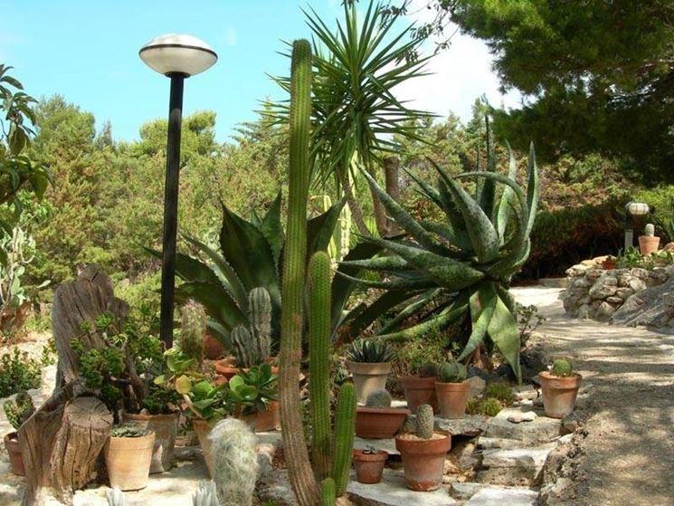 Giardini piante grasse piante grasse realizzazioni con - Piante grasse da esterno pendenti ...