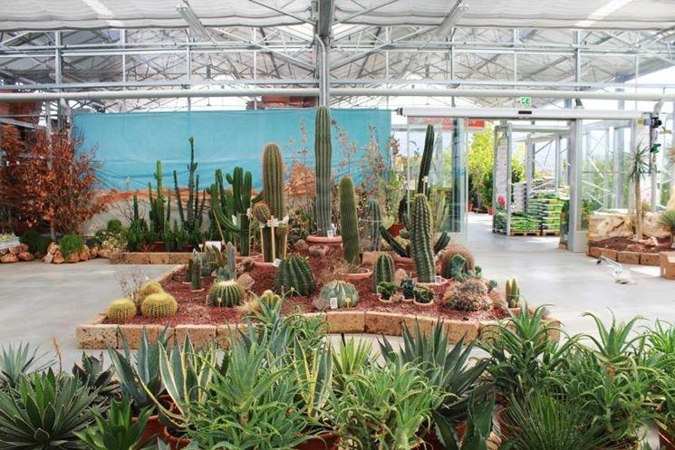 Giardini piante grasse - Piante Grasse - Realizzazioni con ...
