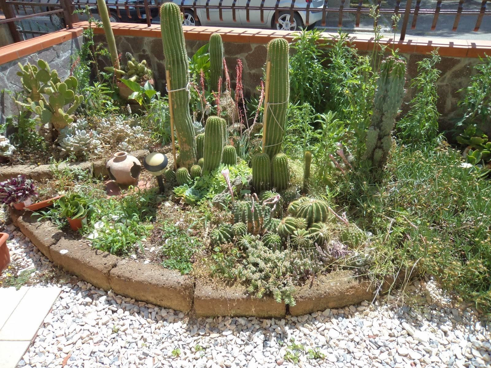Giardini piante grasse piante grasse realizzazioni con for Esempi di giardini