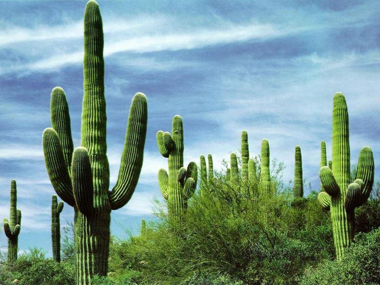 foto cactus