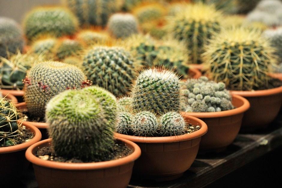 Immagini piante grasse piante grasse piante grasse for Piante grasse in giardino