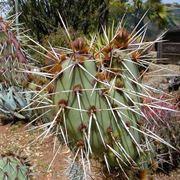 immagini di piante