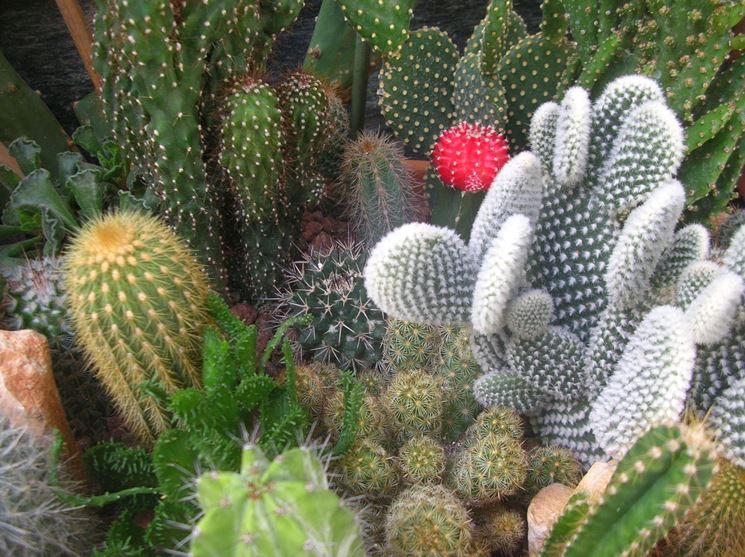 insieme di piante grasse
