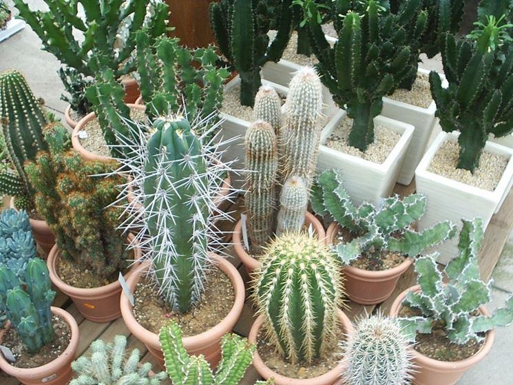 Innaffiare piante grasse piante grasse consigli per - Giardino piante grasse ...