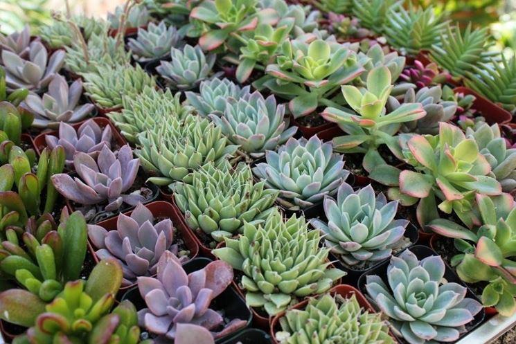 file di piante grasse