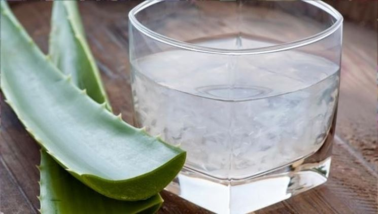 Con gli estratti di aloe si preparano bevande dalle propriet� terapeutiche