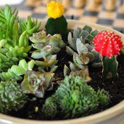 Composizione di piante grasse da appartamento