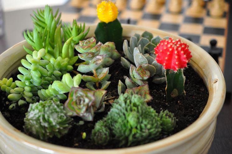 Piante grasse appartamento piante grasse piante grasse for Piante belle da giardino