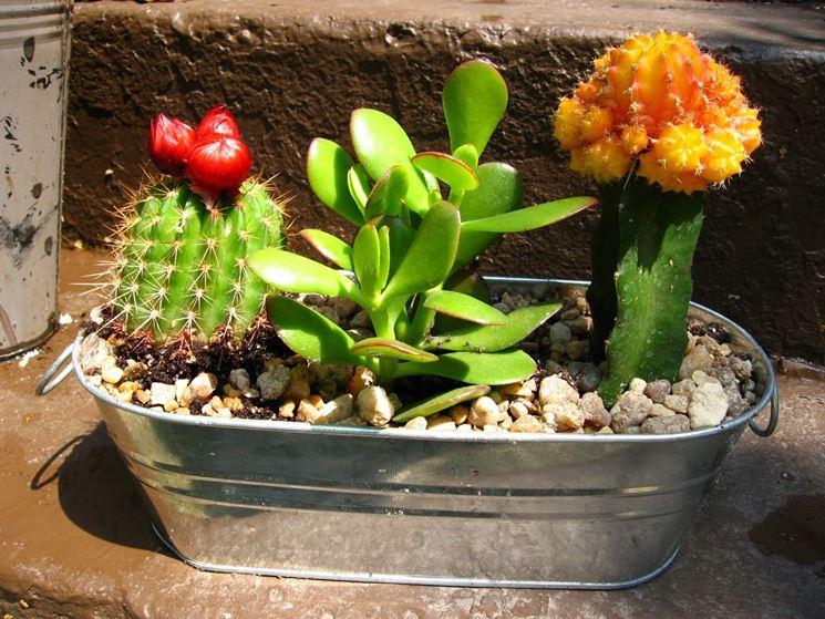 Bien-aimé Piante grasse cactus - Piante Grasse - Il cactus e le piante grasse QN65