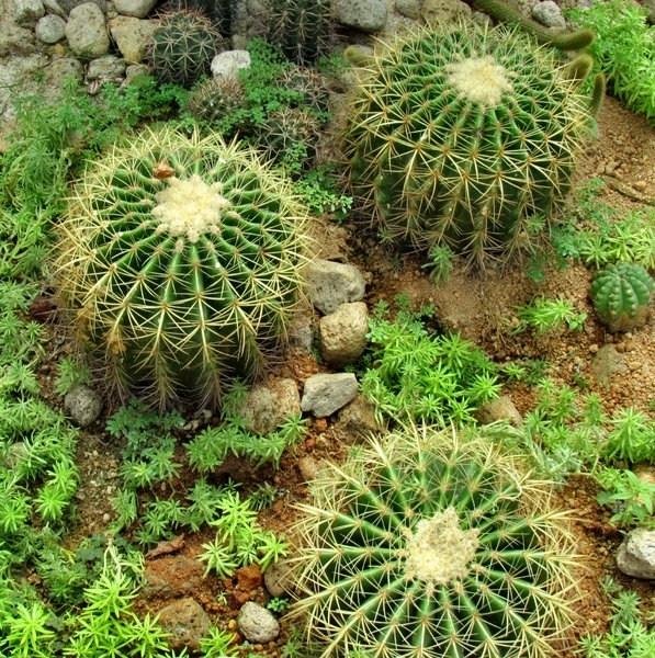 Piante grasse cactus piante grasse il cactus e le - Composizione piante grasse giardino ...
