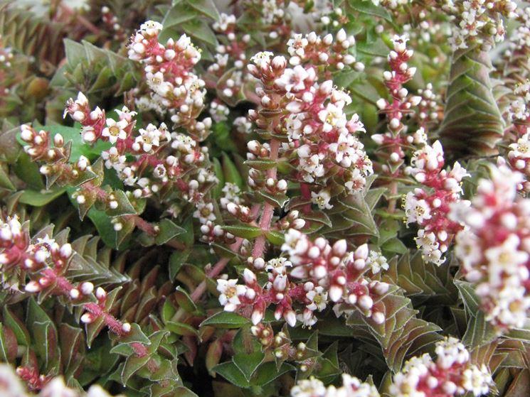 Piante grasse con fiore piante grasse piante grasse fiore - Piante particolari da giardino ...