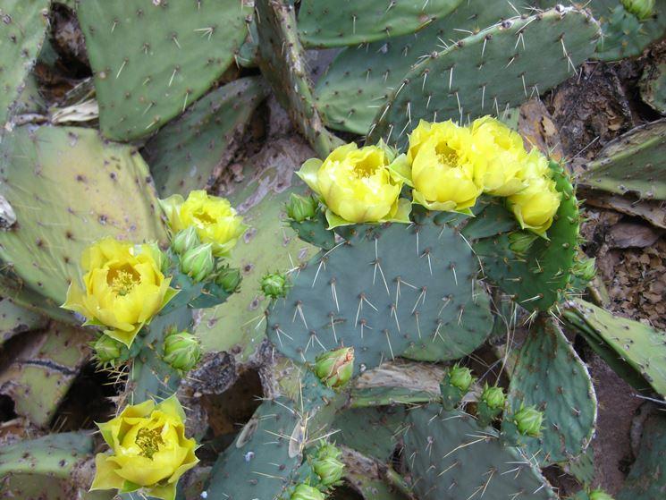 Piante grasse con fiori piante grasse piante grasse - Piante da interno con fiori ...