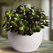 piante grasse cura