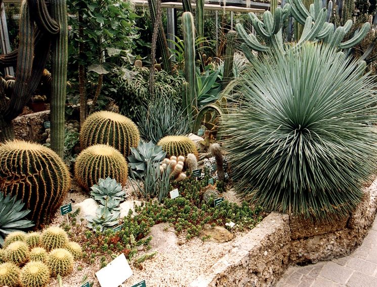 Piante grasse da giardino piante grasse il giardino for Piante e alberi da giardino