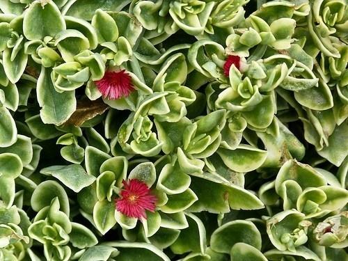 Piante grasse da giardino piante grasse il giardino con piante grasse - Piante da giardino profumate ...