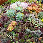 piante online economiche