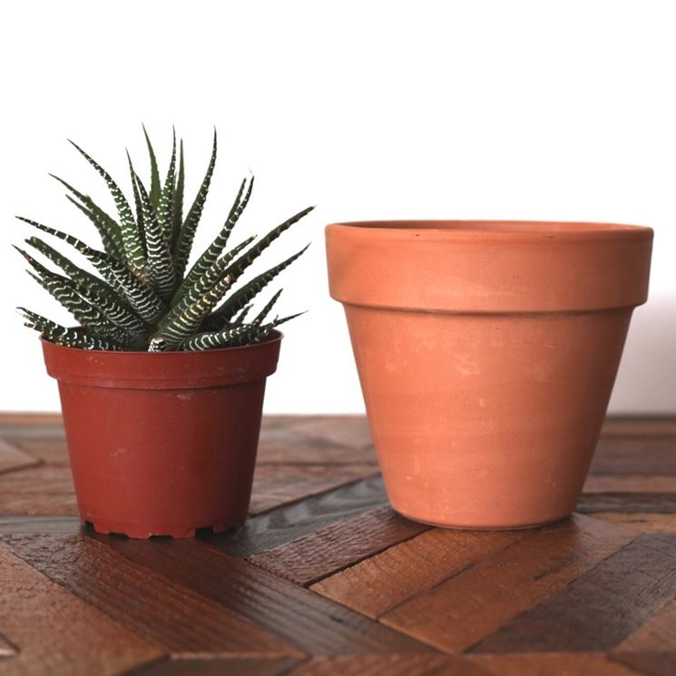 vaso piante grasse