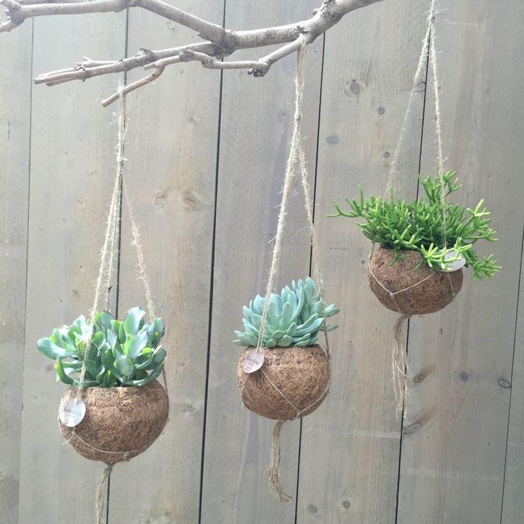 Rinvaso piante grasse piante grasse come rinvasare le for Tutte le piante grasse