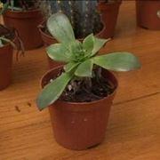 terra per piante grasse