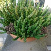 Splendida pianta grassa cresciuta dopo molti anni dalla semina