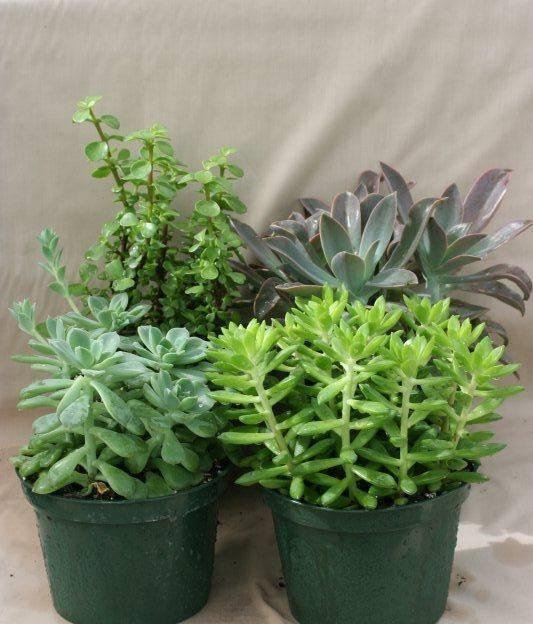 Terriccio piante grasse piante grasse terriccio per le for Piante grasse in giardino