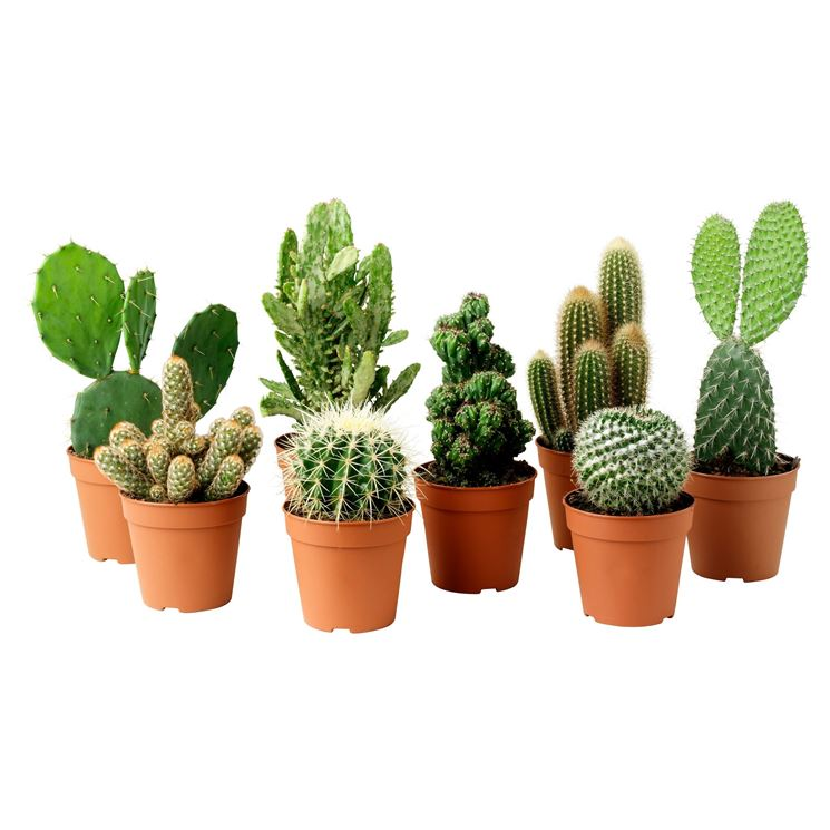 Piccoli vasi per piccole piante grasse