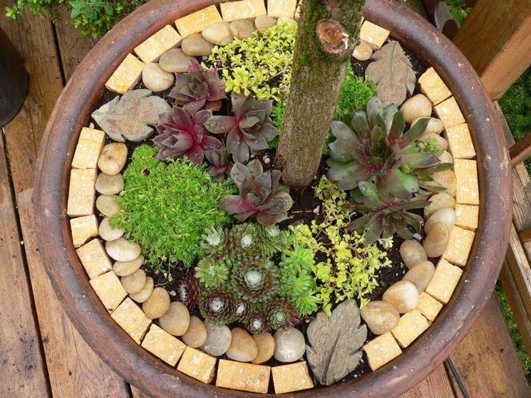 Vasi piante grasse piante grasse vasi per piante grasse - Vasi con piante grasse ...