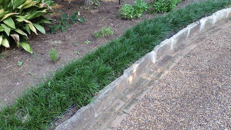 Bordura giardino convallaria nana