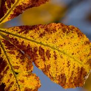 pianta erica