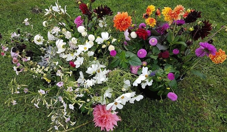 Fiori autunnali piante perenni 10 fiori autunnali for Giardino fiori