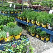 nomi di piante