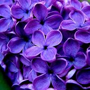nomi di fiori