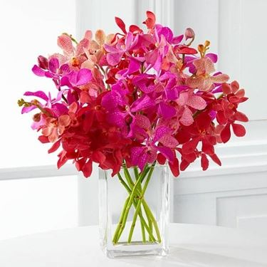 mazzo orchidee