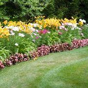 piante pieno sole perenni