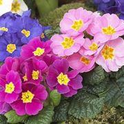 Fiori particolari piante perenni fiori particolari for Cespugli fioriti perenni resistenti al freddo